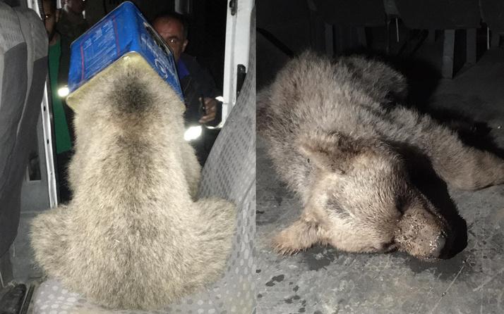 Ağrı'da ayı yavrusunun kafası teneke kutuya sıkıştı itfaiye yetişti