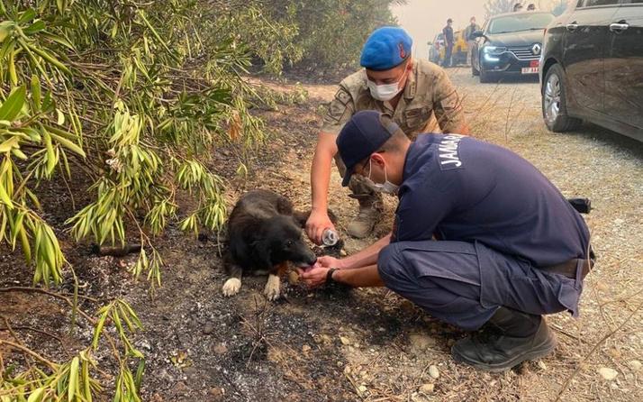 Manavgat'ta alevlerin arasından kurtardıkları köpeğe elleriyle su içirdiler