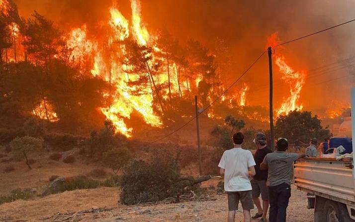 Orman yangınlarındaki yanan ağaçlar satışa çıkarıldı 38 milyon lira gelecek