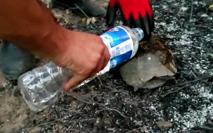 Manavgat'taki orman yangınında küller arasında kalan kaplumbağayı itfaiye kurtardı