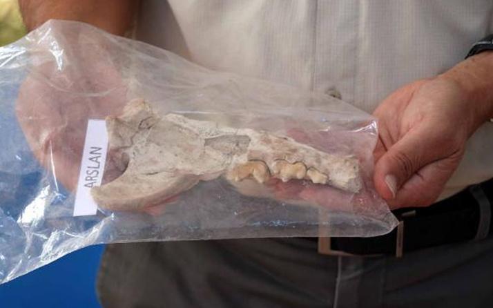 Kayseri'de kazı çalışmalarında bulundu! 4 bin yıl öncesine ait aslan kemiği