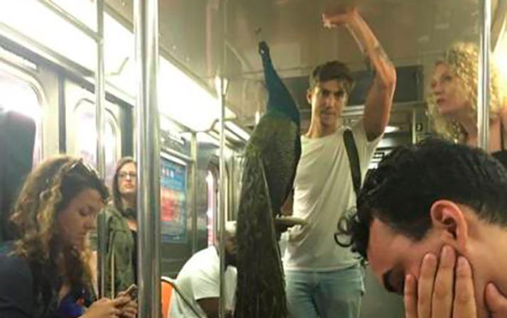 Metrolardan en çılgın insan fotoğrafları!