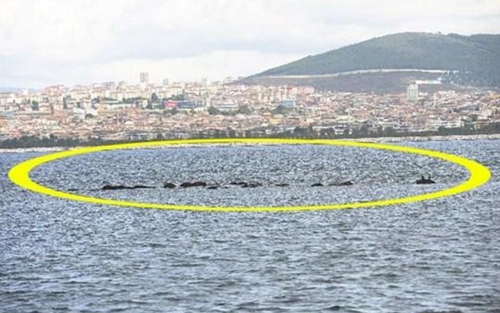 İstanbul'da denizin altı kaynıyor depremden sonra oldu şoke ediyor