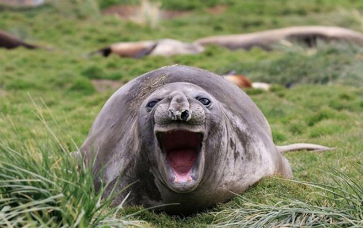Vahşi doğa hiç bu kadar komik olmamıştı! Hayvanların güldüren halleri
