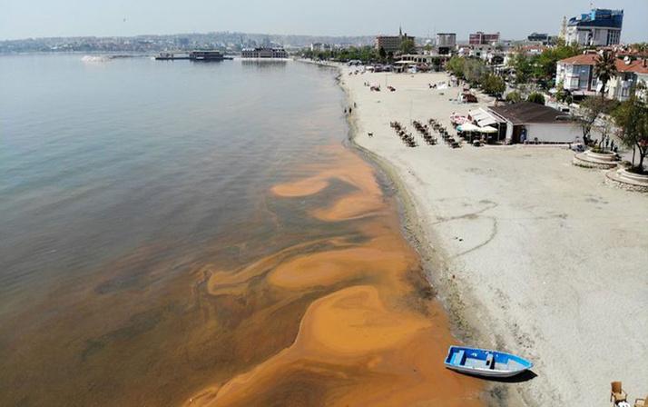 Denizin renk değişimi korkuttu! Açıklama geldi