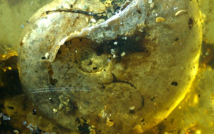 99 milyon yıllık ilk deniz canlısı bulundu! Bilim dünyası böylesini görmedi