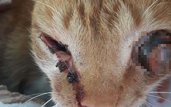 Adıyaman'da işkence yapılarak gözü oyulan yavru kedi tedaviye alındı
