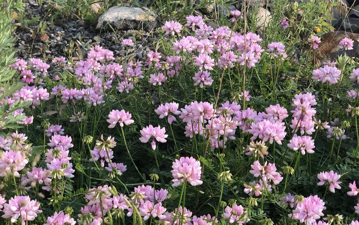 Kars'ta kartpostallık görüntüler ortaya çıktı, rengarenk çiçekler