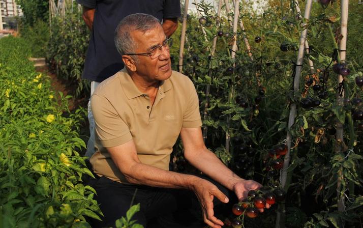 Mersin'de bu domatesleri gönüllüler yetiştiriyor rengini görenler şaşırıyor