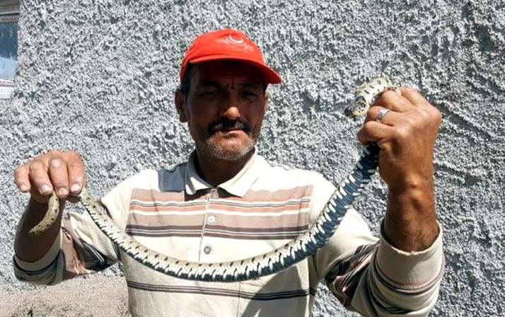 İnanılmaz olay! 200 lira karşılığında eve girdi ve zehirli yılanı..