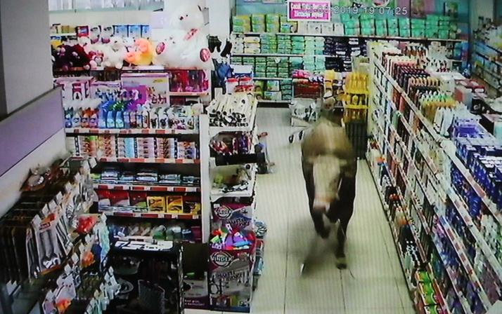 Adıyaman'da kurbanlık dana girdiği marketi yerle bir etti