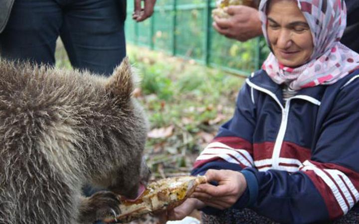 Yavru ayıları ballı ekmekle besliyor