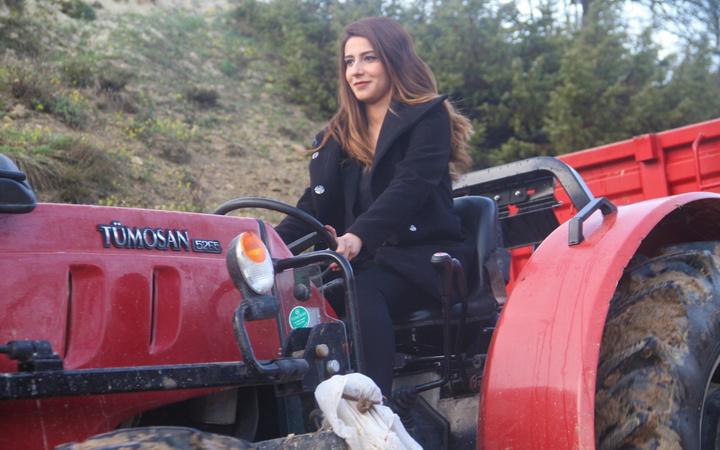En farklı mahalle muhtarı! İnek sağıyor traktör sürüyor çiftçilik yapıyor