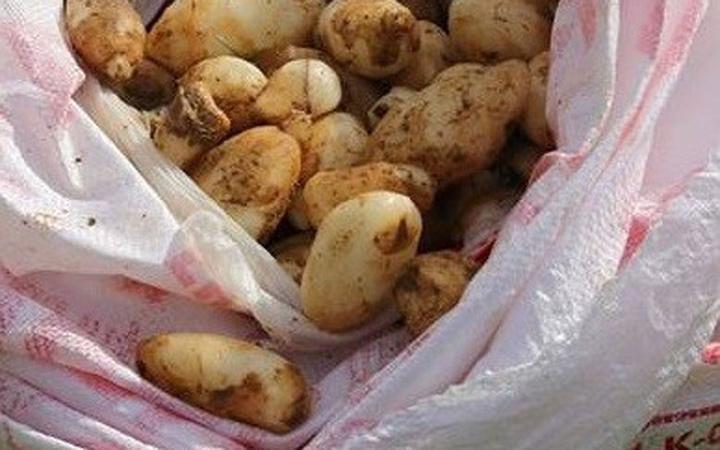 25 kilo salep soğan ile yakalandılar! 300 bin TL ceza yediler