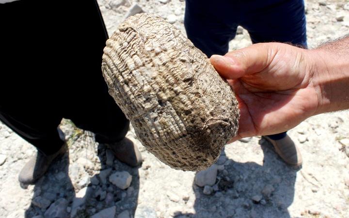 Tam 155 milyon yıllık çıktı Adıyaman'da dağda gözlerine inanamadılar