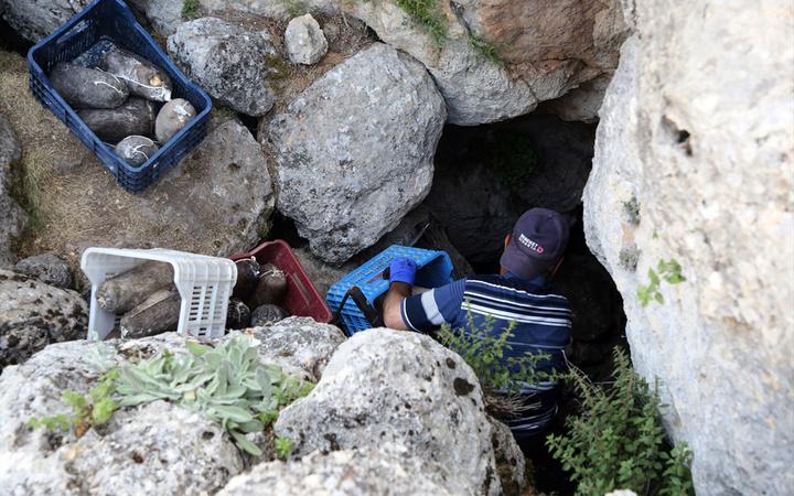 Mersin'de Lezzeti için 5 ay mağarada bekletiliyor kilosu 100 TL'den satılıyor