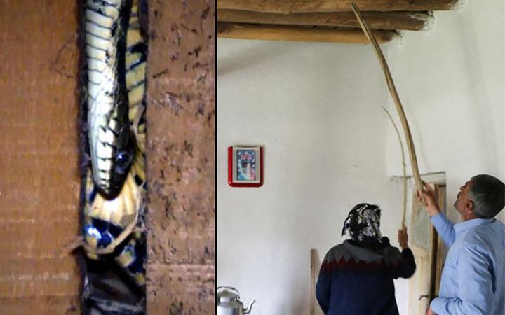Hakkari'de yılanlar evi istila etti aile kabusu yaşadı! İlk kez...