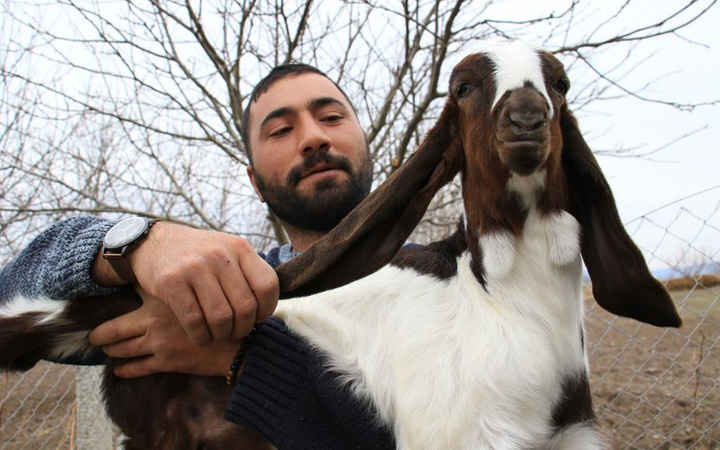 Elazığ'da kimse anlamadı süt için aldığı keçiler çift çift kuzulamaya başladı