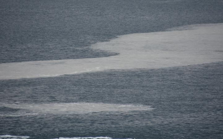 Çanakkale Boğazı'nda korkutan görüntü! Ağlara yapışıyor gözlerini tıkıyor
