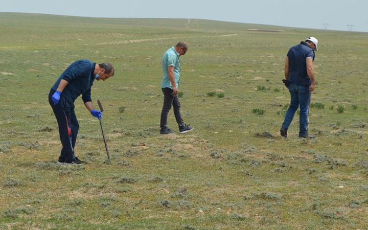 Afyonkarahisar'da köylüler define arar gibi arıyor şekli patatese benziyor