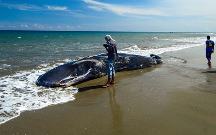 Balinanın karnından hazine çıktı! Yemen'de 'kötü koku' 35 balıkçıyı milyoner etti
