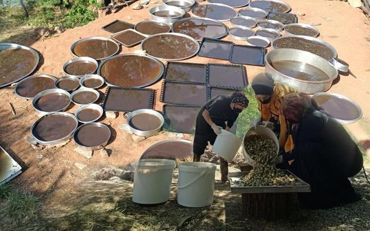 70 hastalığa şifa ve yolculuğu çok 'tatlı'! 100 yıldır Sivan Dut pekmezi sayesinde geçiniyorlar