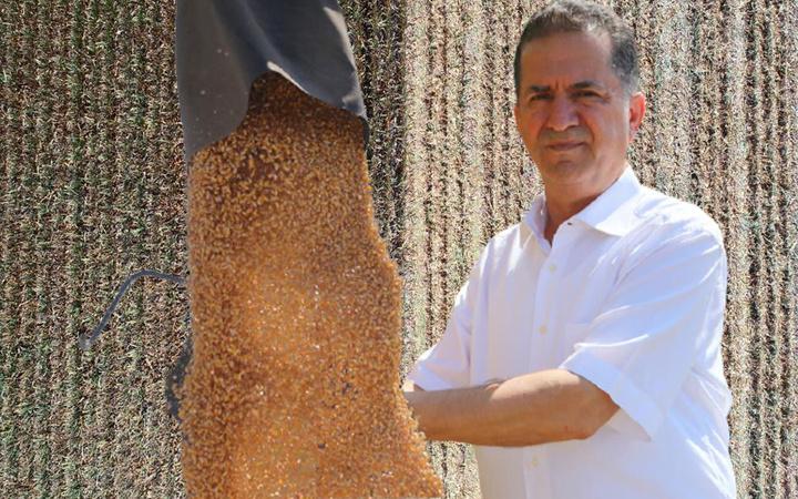 'Sarı altın' deniyor Adana'da hasat başladı! Üretici mısır fiyatlarında o rakamı istiyor