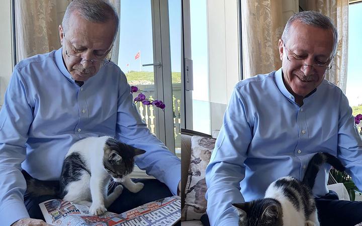 Cumhurbaşkanı Erdoğan torunu Canan Aybike'nin kedisiyle fotoğrafını paylaştı