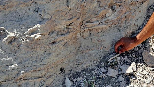 Çin'de 535 milyon yıllık larva bulundu