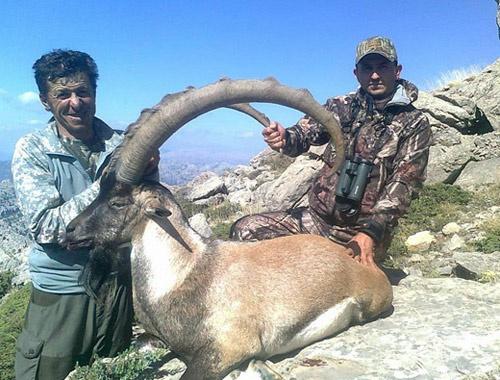 Konya'da öyle bir dağ keçisi avlandı ki