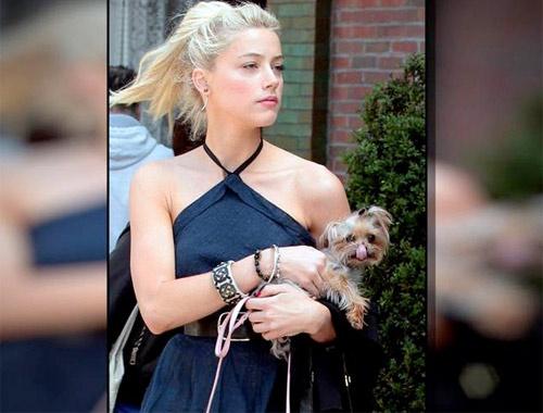 Johnny Depp'in eşinden köpek kaçakçılığı itirafı