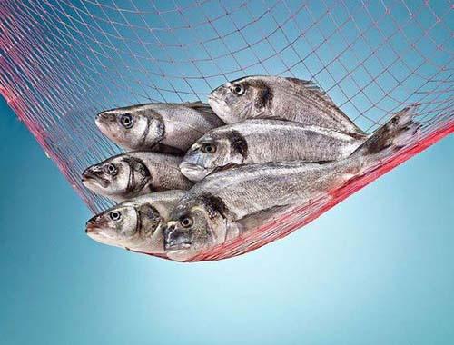 Balık nasıl yapılır en lezzetli ve iyi nasıl pişer?