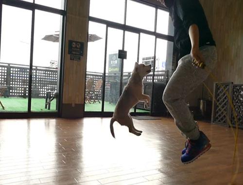 Sahibiyle birlikte ip atlayan köpek