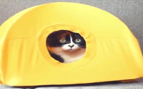 Kedi sahiplerinin hayatını kolaylaştıracak 5 tavsiye