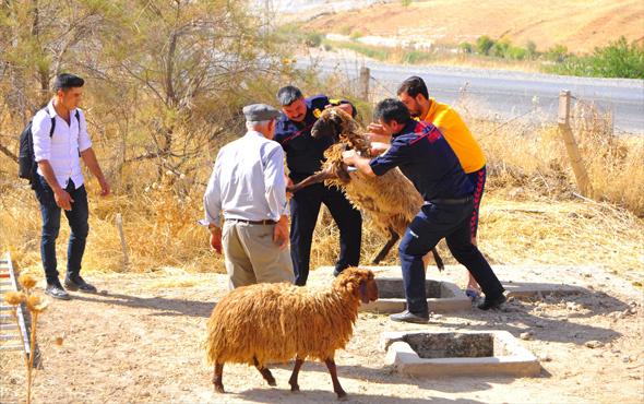 Köpeklerden kaçan koyun sürüsü kuyuya düştü; 1 koyun telef oldu