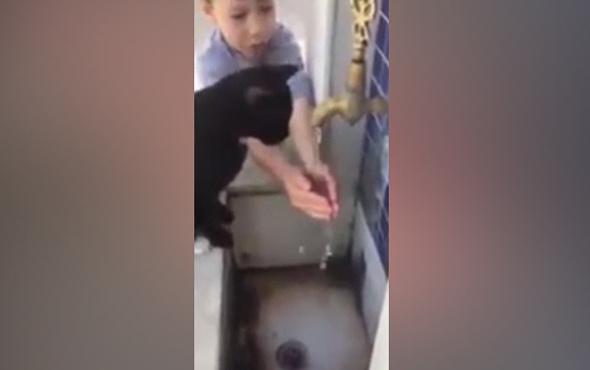 Kediye elleriyle su içiren minik çocuk