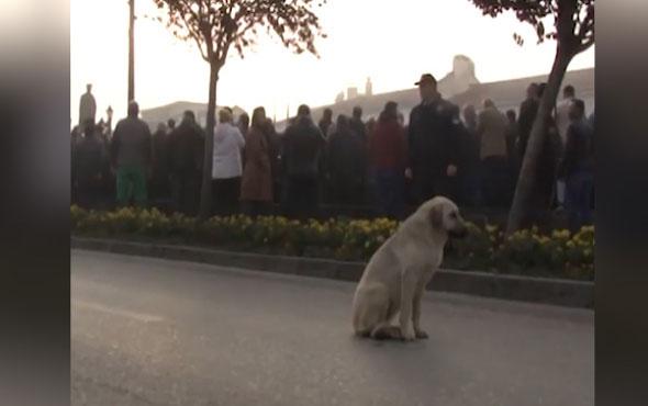 10 Kasım'da sokak köpeğinden 'vefa' dersi!
