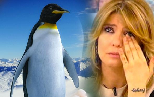 Gülben Ergen'e darbe üzerine darbe bu kez de penguen şoku!