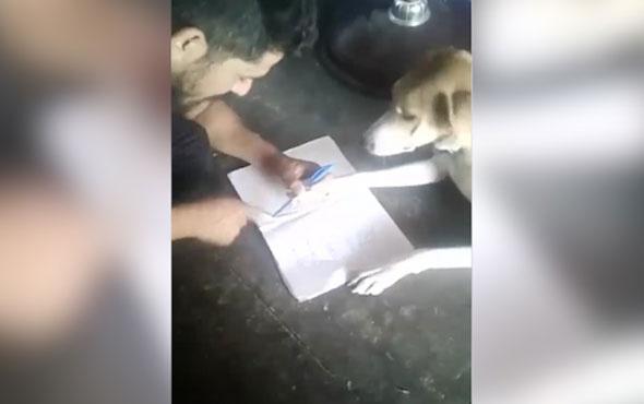 Alfabe öğretmeye çalıştığı köpeğe resmen işkence yaptı