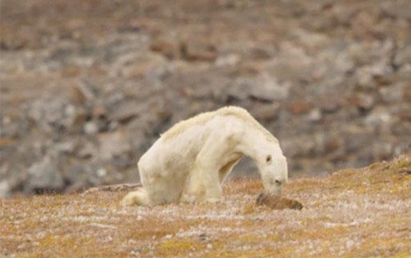 İnsanlığı utandıran görüntüler küresel ısınmanın acı yüzü