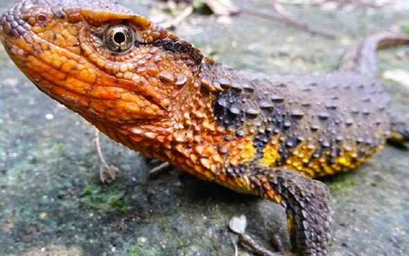 Yeni keşfedildi burada 100'den fazla yeni canlı türü var