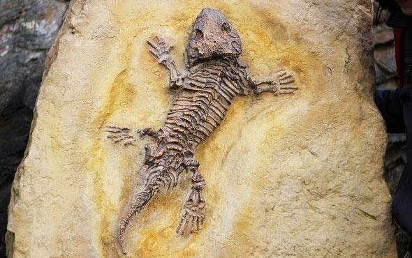 Kertenkele fosili biyoloji tarihini değiştirecek
