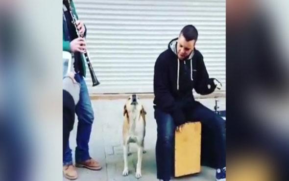Sokak müzisyenlerine eşlik eden sevimli köpek!