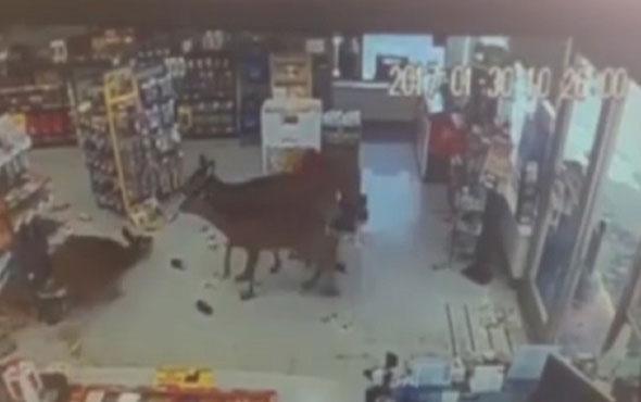 Markete giren geyikler ortalığı birbirine kattı