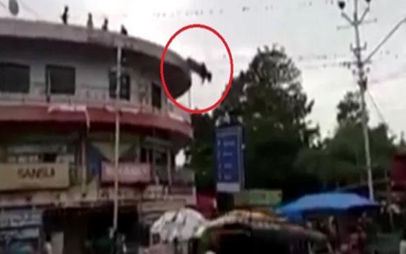 İnek çatıdan atladı sosyal medya sallandı