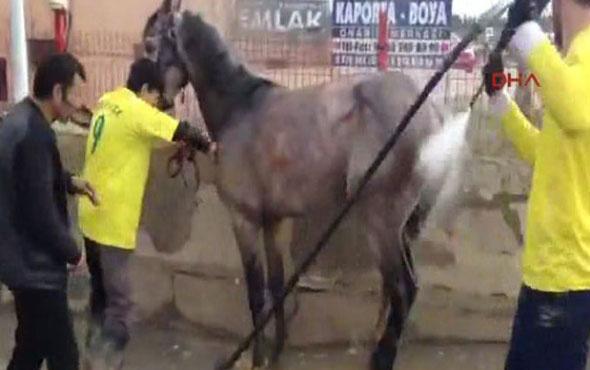 Atı otomobil gibi yıkadılar