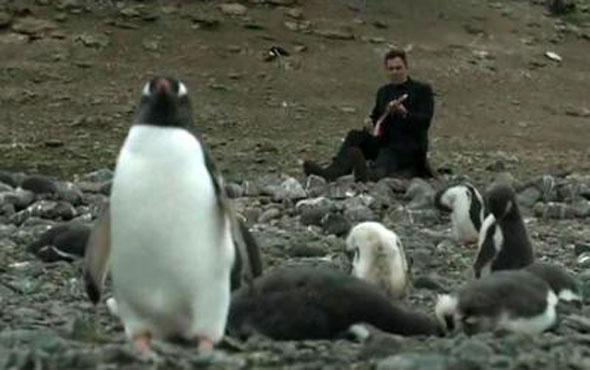 Ünlü müzik grubu penguenlere konser verdi