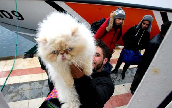 Kedili mülteci şaşırttı!
