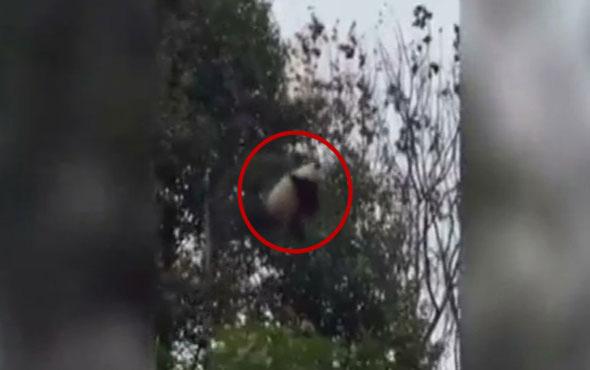 Bebek panda yürekleri ağızlara getirdi