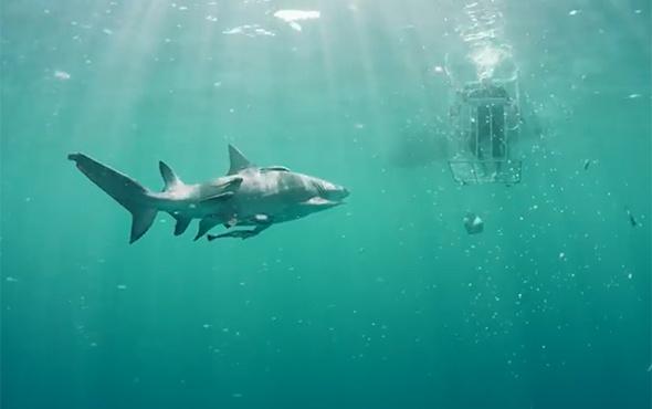 Galaxy S8'in açılışını köpek balıkları içinde yaptılar!